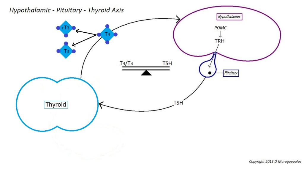 image of hypothalamic pituitary and thyroid axis function
