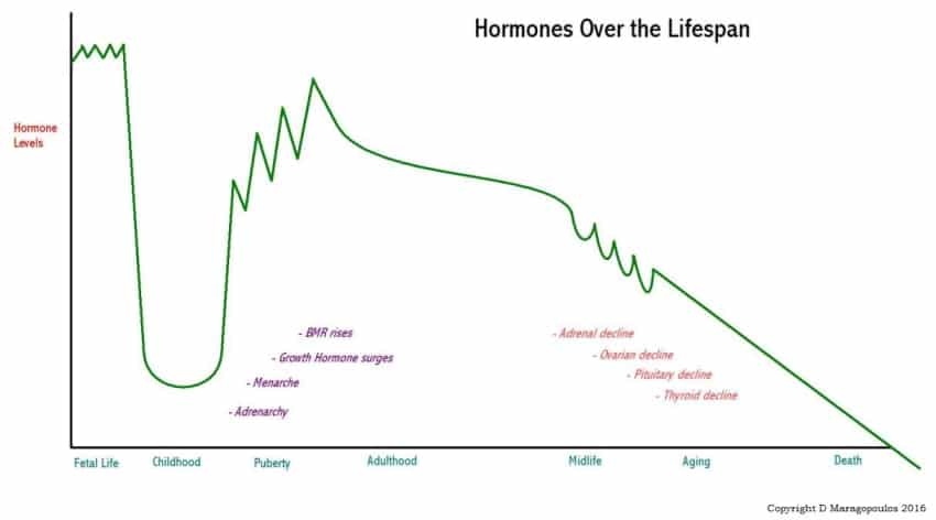 hormones over the lifespan graph