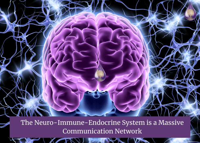 The Neuro-Immune-Endocrine System is a Massive Communication Network