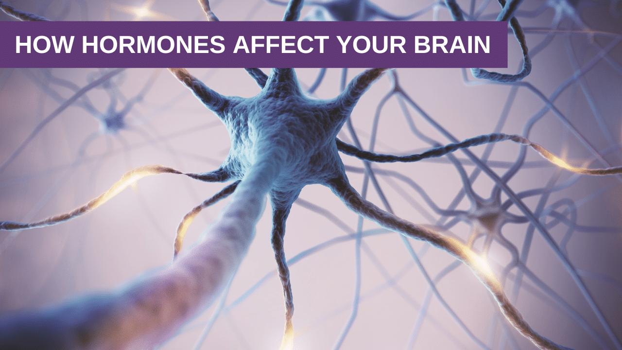 How Hormones Affect Your Brain
