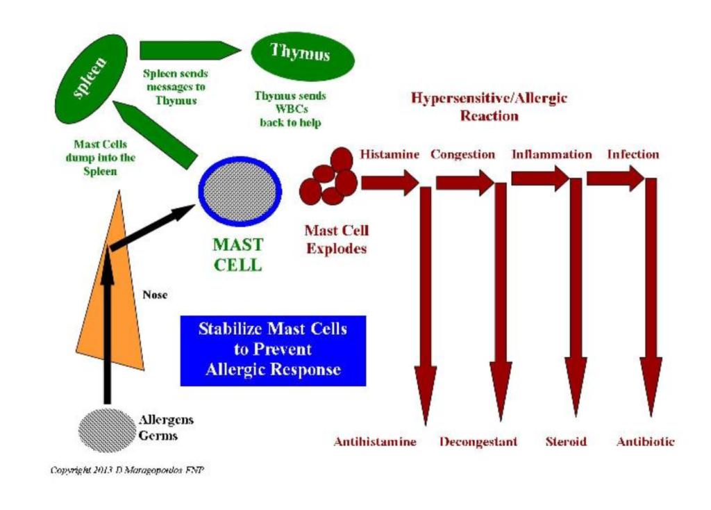 allergy diagram