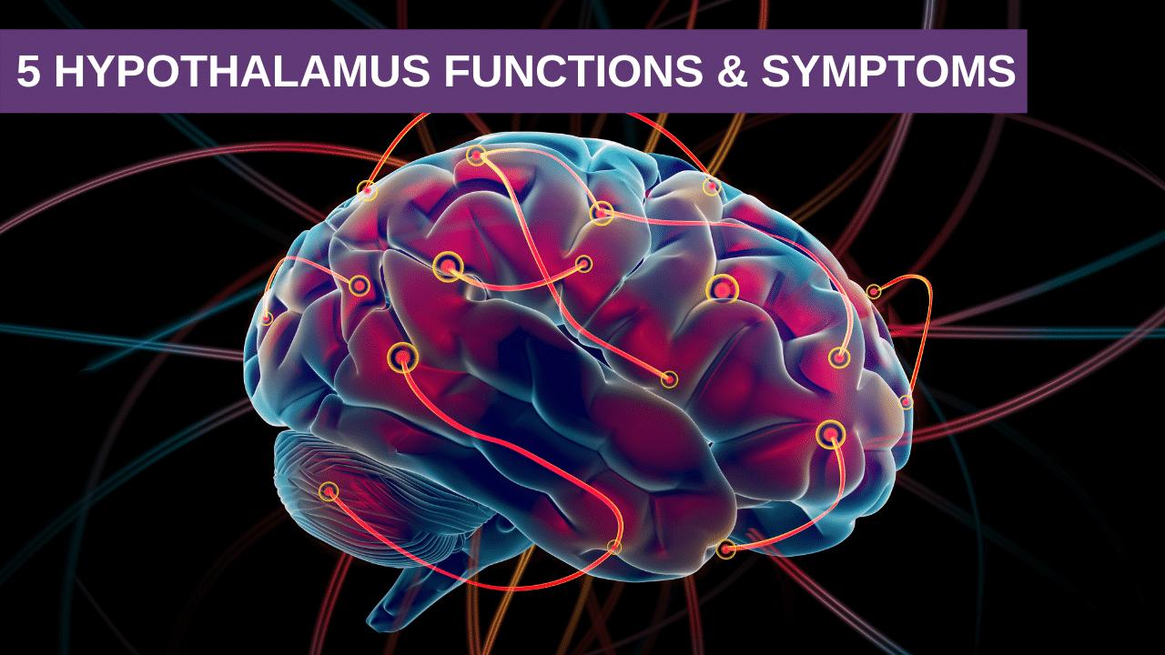 5 Hypothalamus Functions & Symptoms
