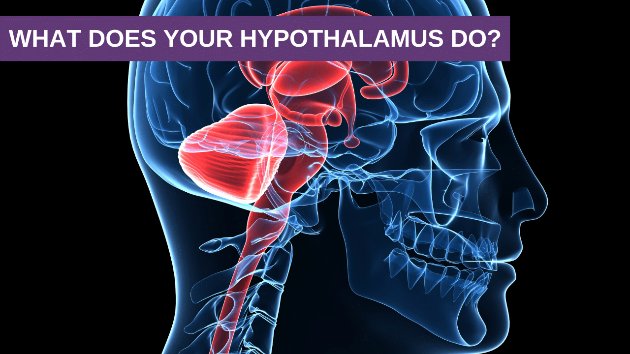 What does your hypothalamus do?