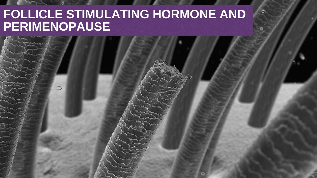 Follicle Stimulating Hormone and Perimenopause