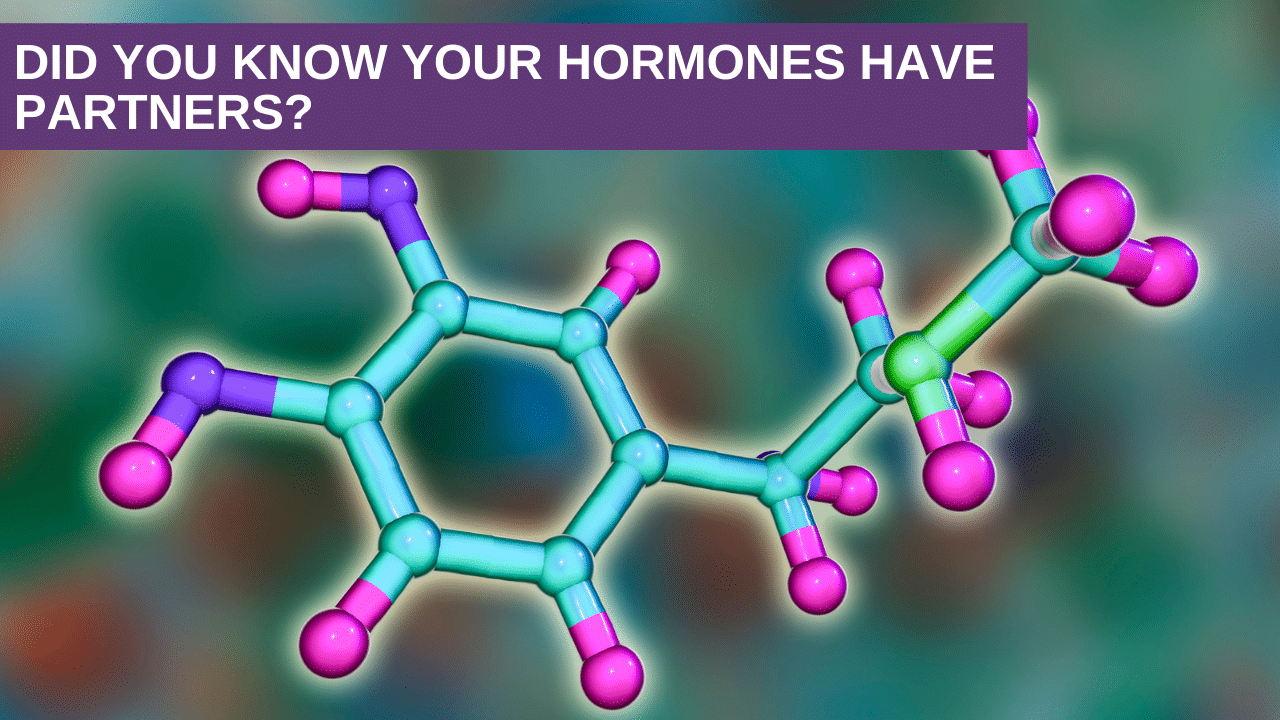 Did You know Your Hormones have Partners?