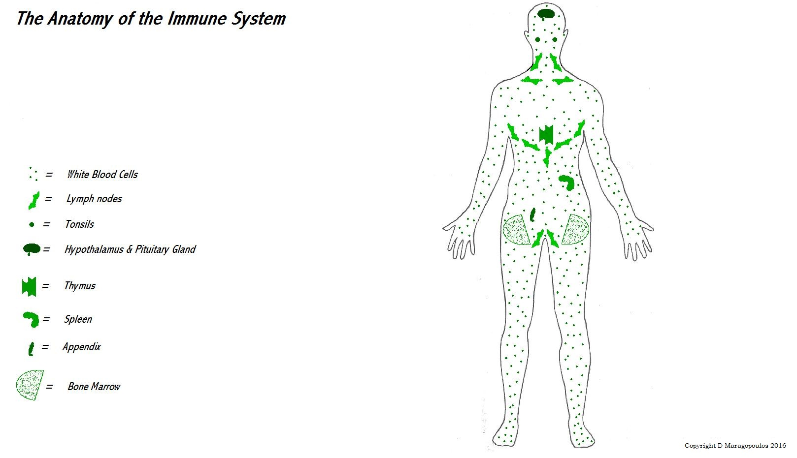 autoimmunity figure