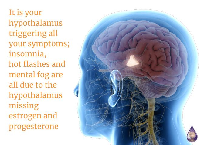hypothalamus missing estrogen and progesterone