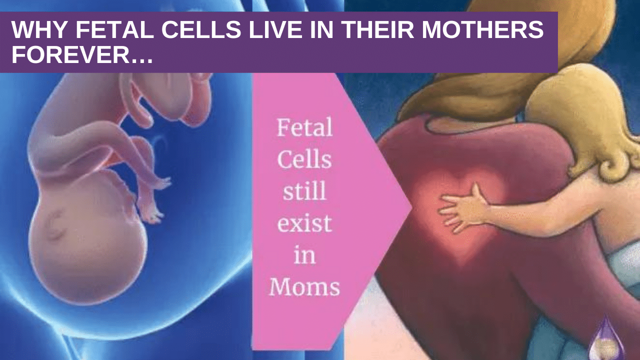 Why fetal cells live in their mothers forever…