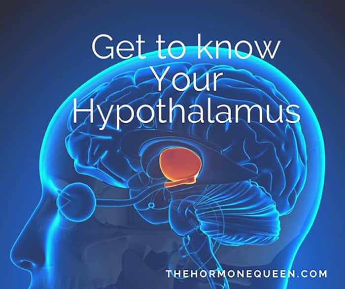 Get to know your hypothalamus