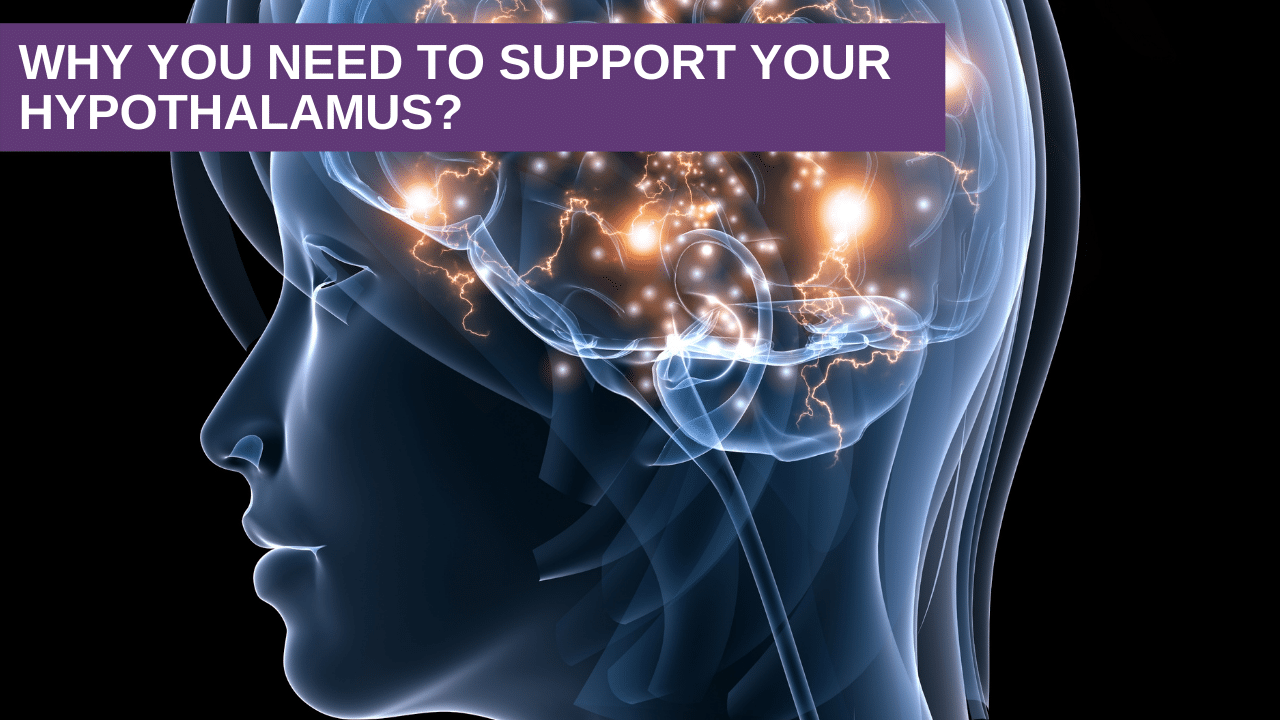 Why You Need to Support Your Hypothalamus?