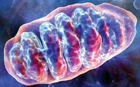 image of mitochondria