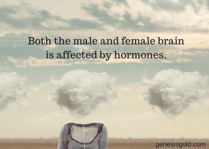 both male and female brains can be affected by hormones