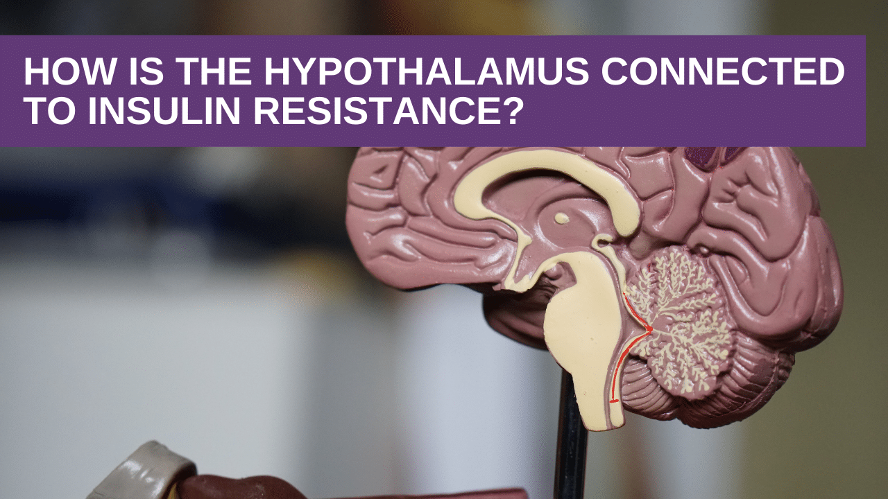 How is the hypothalamus connected to insulin resistance?