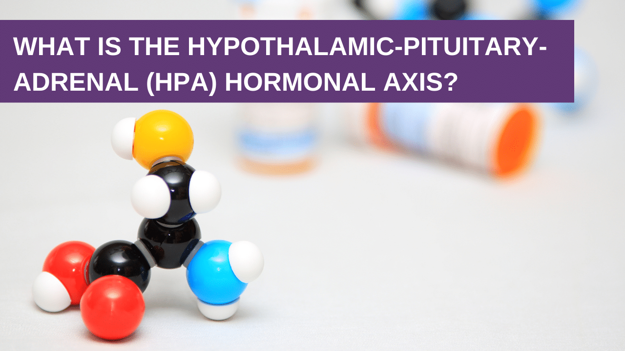 What is the Hypothalamic-Pituitary-Adrenal (HPA) Hormonal Axis?